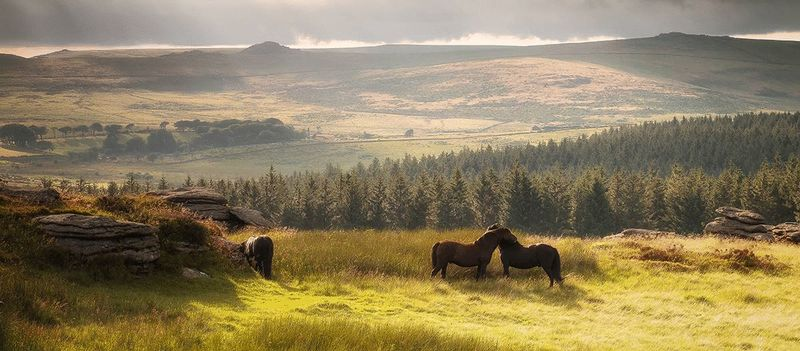 Dartmoor- click for photo gallery